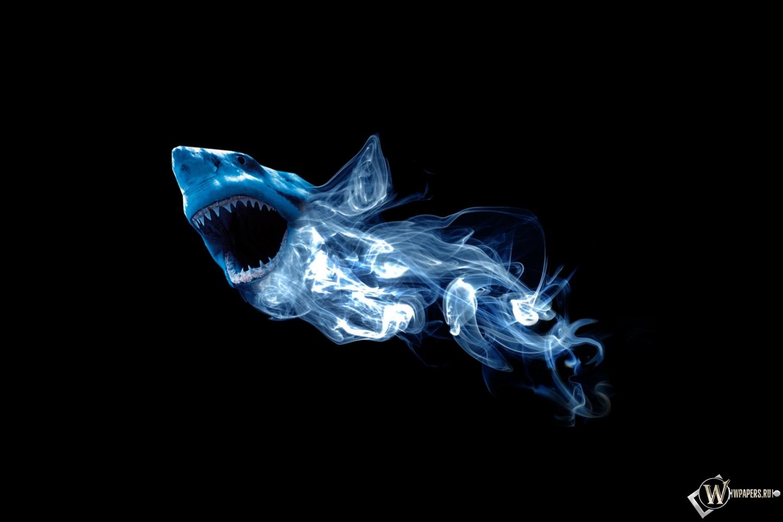 Абстракция акулы