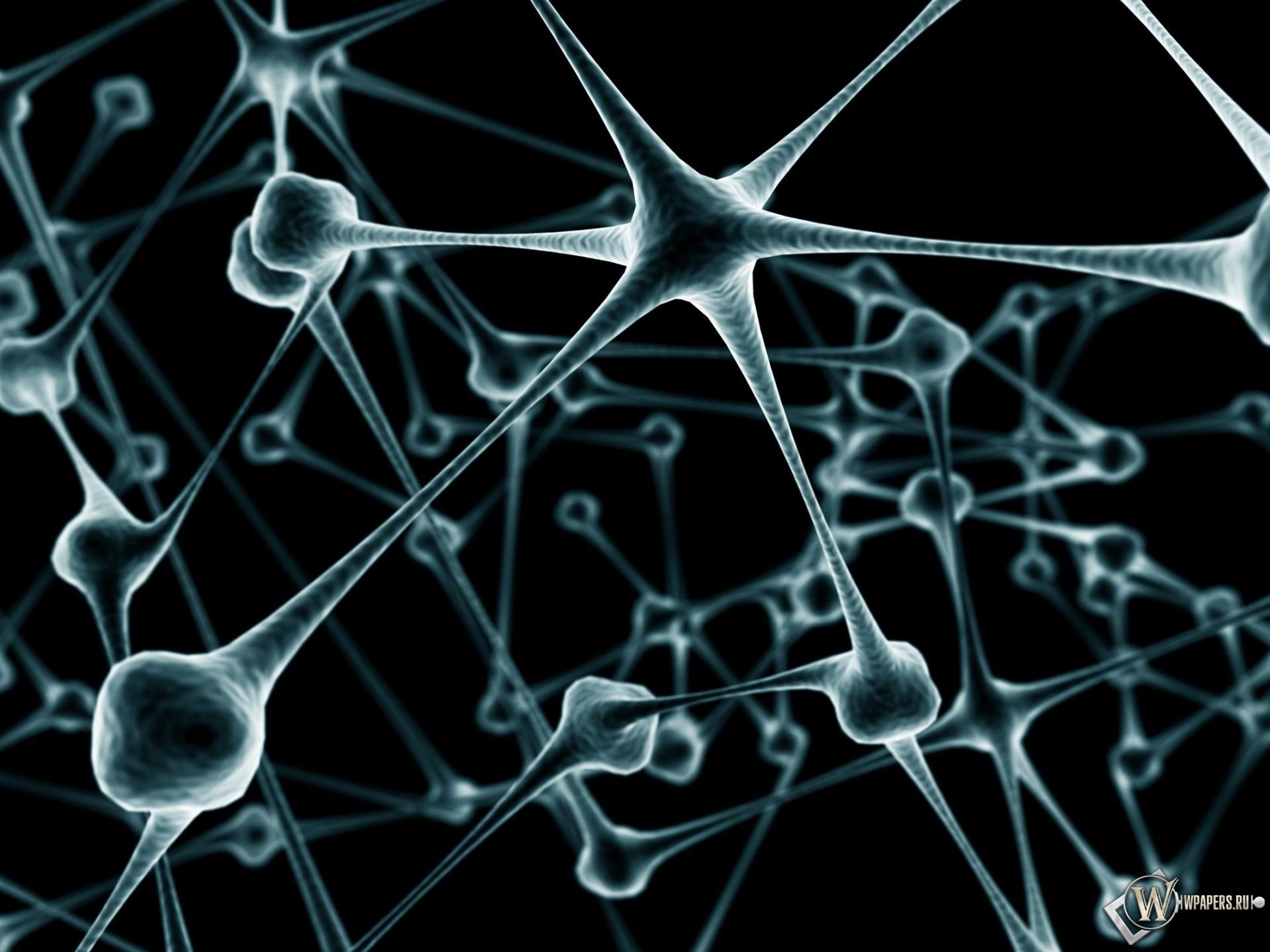 Нейрон фото