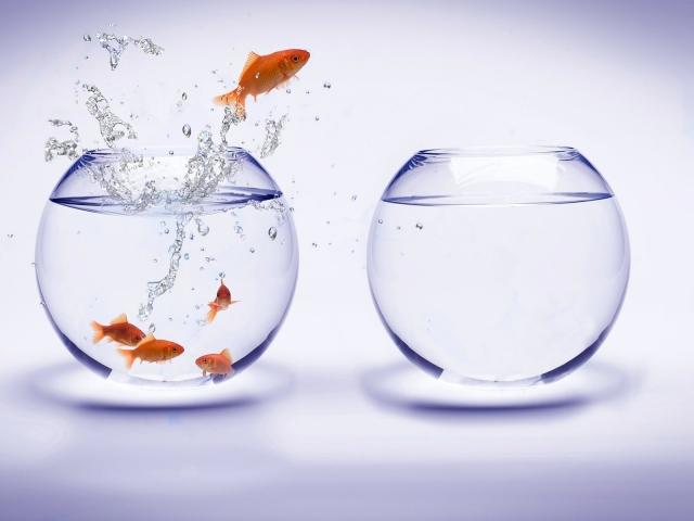 Побег из аквариума