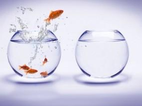 Обои Побег из аквариума: Вода, Аквариум, Рыбки, Рендеринг