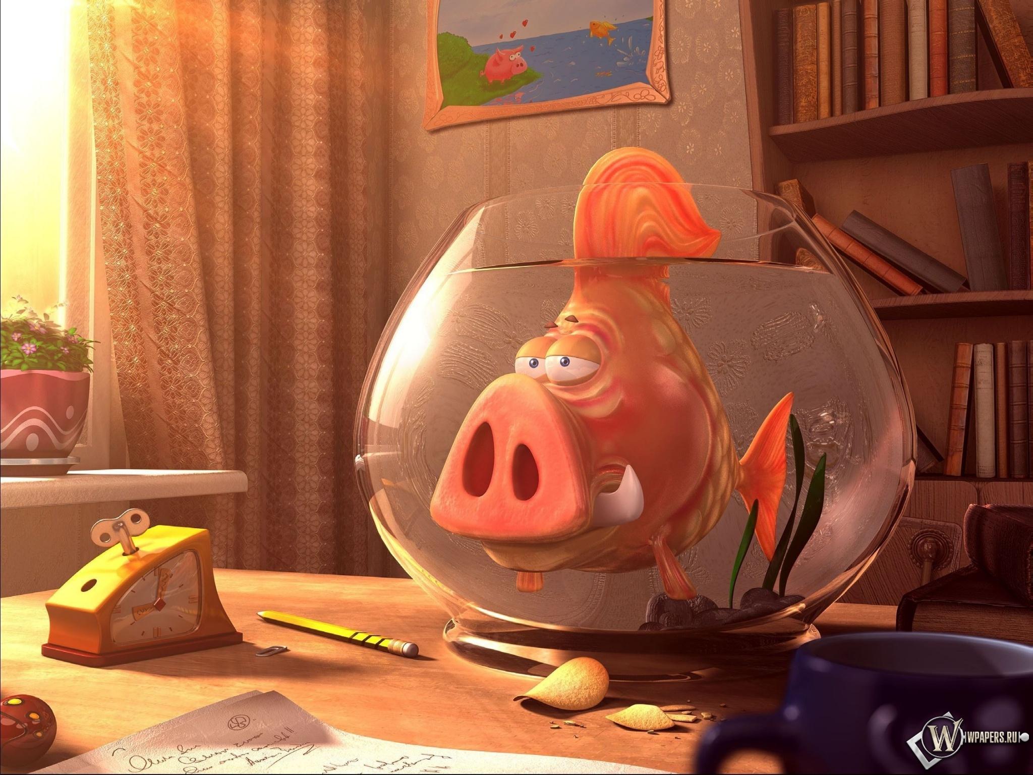Рыба свинья 2048x1536