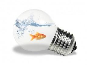 Обои Рыбка в лампочке: Вода, Рыбка, Рендеринг, Лампочка, Рендеринг