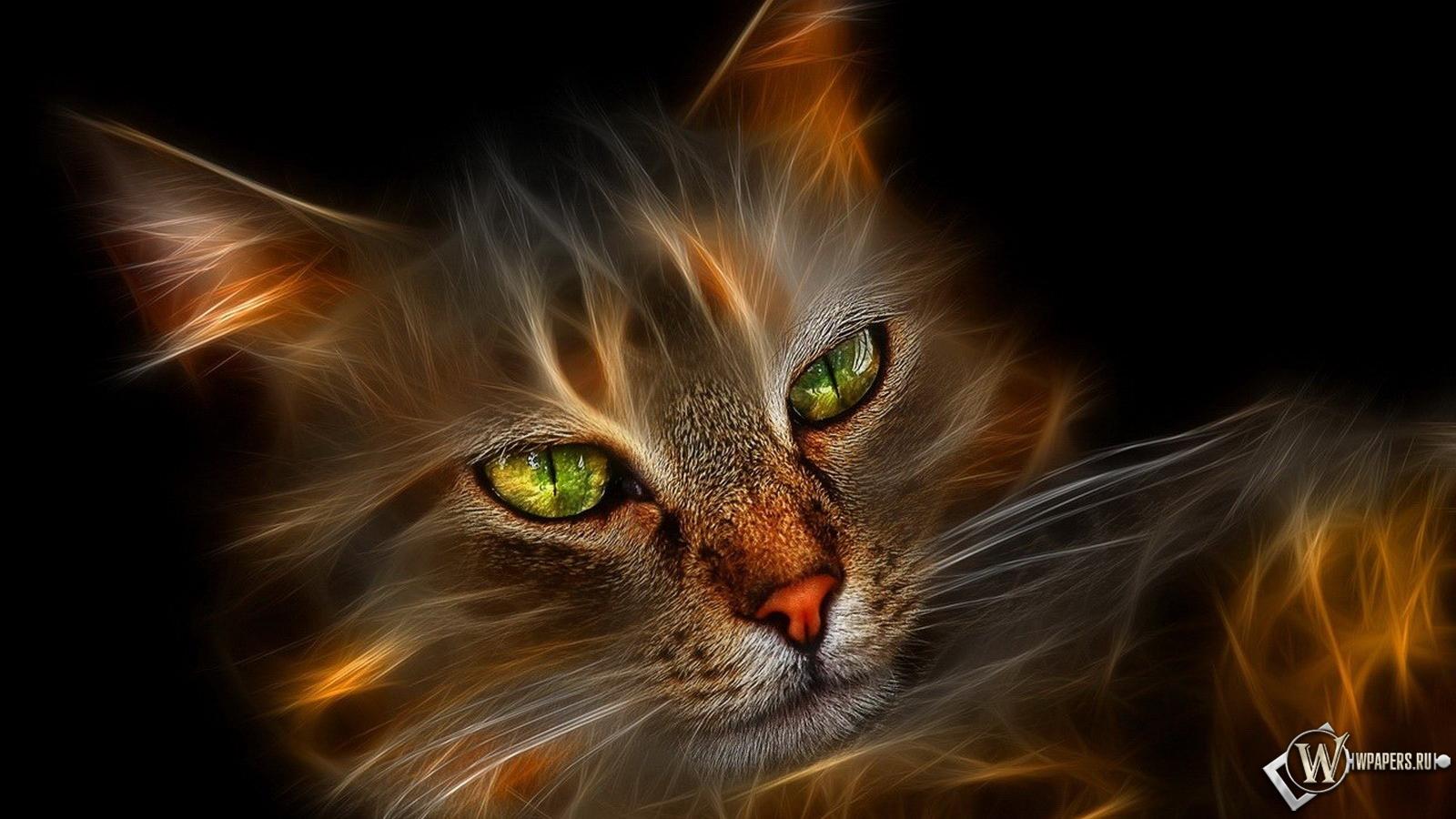 Обои огненный кот на рабочий стол с