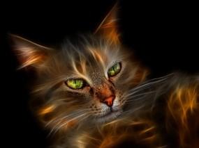 Обои Огненный кот: Кот, 3D графика, Аэрография, Рендеринг