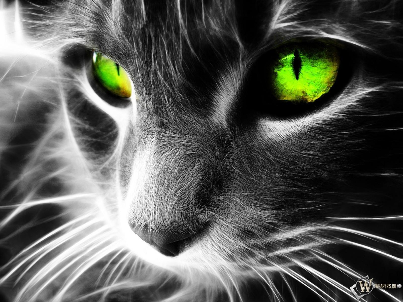 Неоновая кошка 1600x1200
