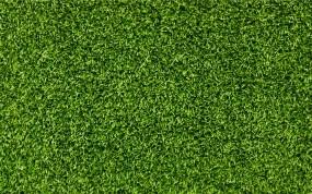нежно-оливковый цвет