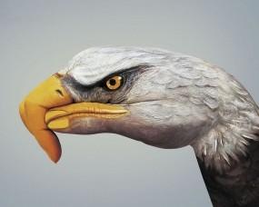 Обои Give a hand to wildlife WWF: Рука, Орёл, Разное