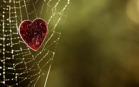 Сердце в паутинке
