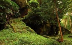 Обои Храм в джунглях: Храм, Джунгли, Прочая архитектура