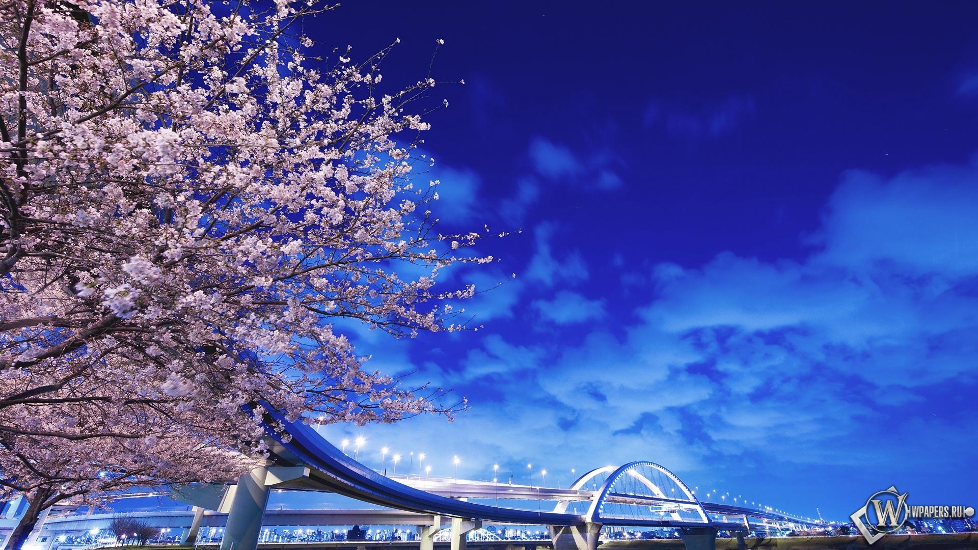 В японии фонари река мост япония