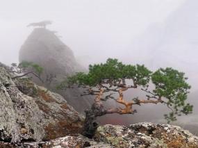 Обои Крым: Деревья, Туман, Крым, Лето, Скала, Крым