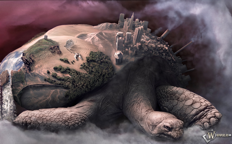 Обои черепаха земля земля черепаха