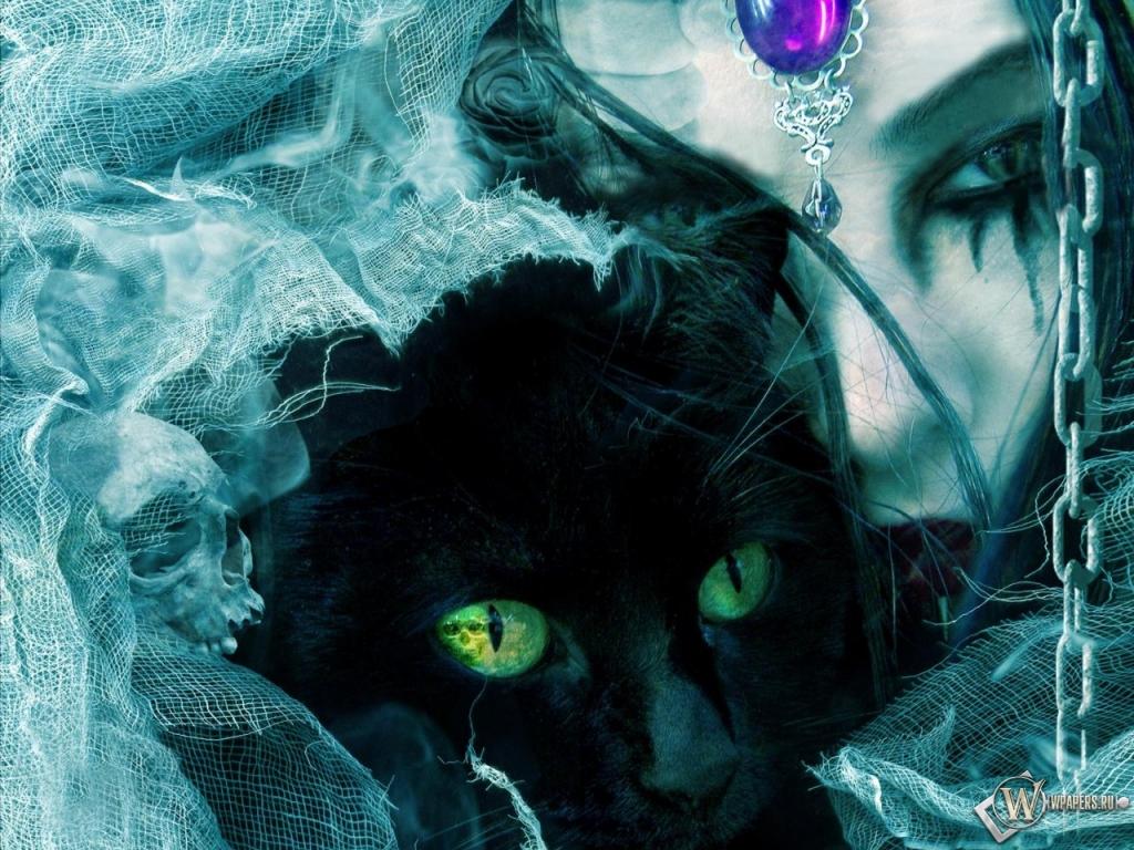 Обои взгляд черной кошки взгляд