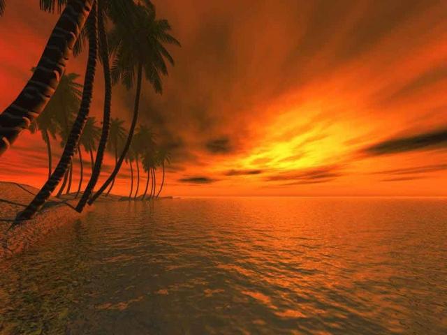 3D Пальмы