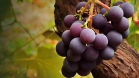 Обои Вкусный виноград: Ягоды, Виноград, Шарики, Ягоды