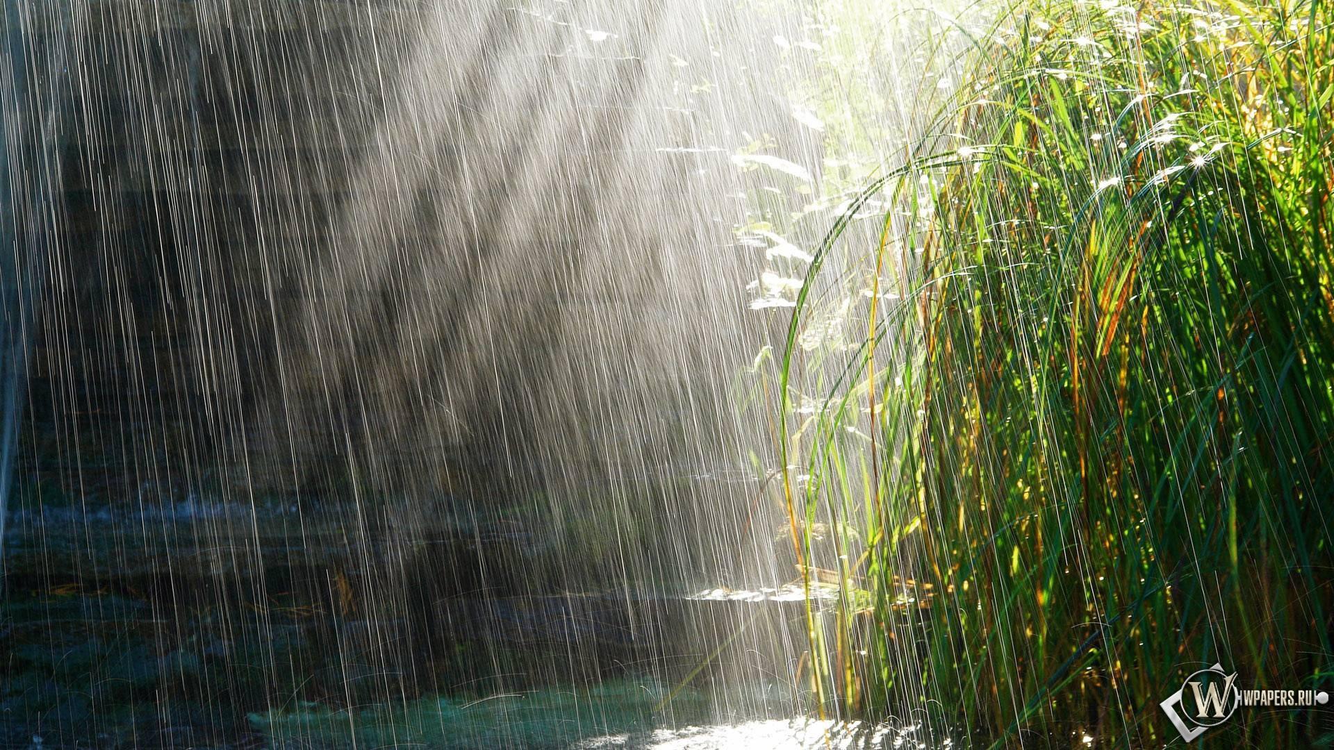Грибной дождь 1920x1080