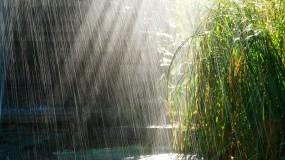 Обои Грибной дождь: Солнце, Дождь, Трава, День победы