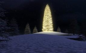 Обои Новогодняя елка в лесу: Огни, Лес, Ночь, Елка, Новый год
