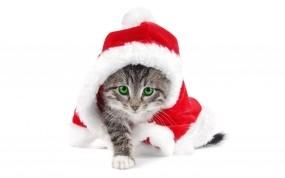 Обои Новогодний котёнок: Новый год, Праздник, Котёнок, Новый год