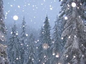 Обои Новогоднее настроение: Зима, Снег, Деревья, Елки, Новый год