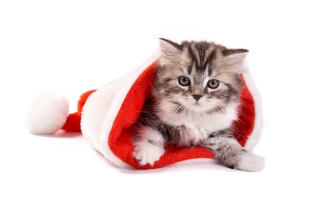 Котёнок в шапке