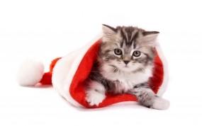 Обои Котёнок в шапке: Новый год, Шапка, Котёнок, Новый год