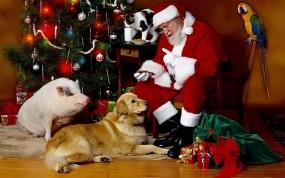 Обои Santa Klaus: Новый год, Рождество, Праздник, Собака, Дед Мороз, Новый год