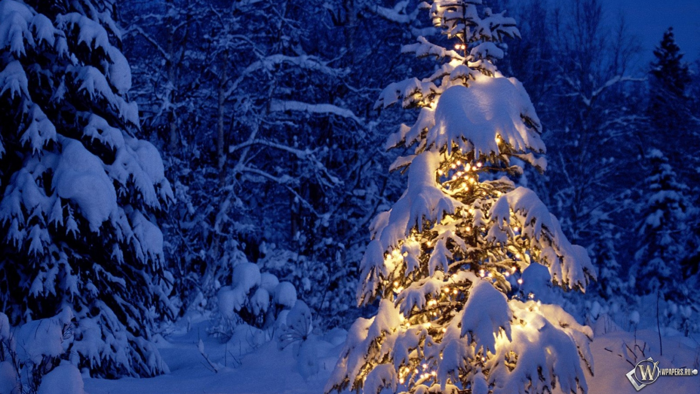 Обои елка в снежном лесу на рабочий