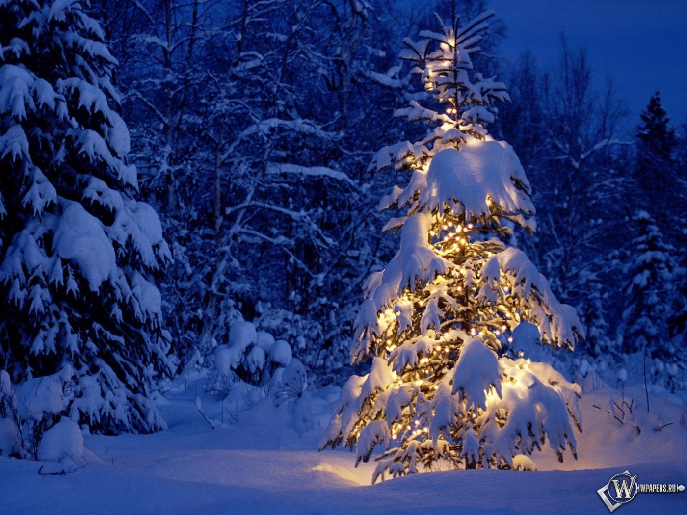 Елка в снежном лесу на рабочий стол с