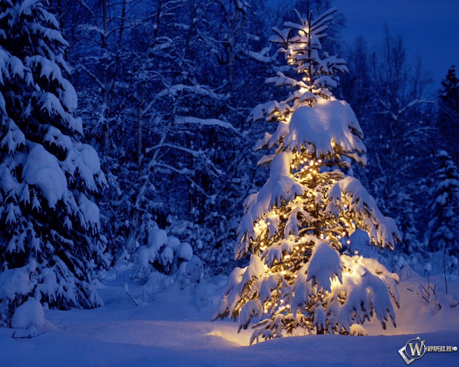 Лесу зима снег лес новый год елка