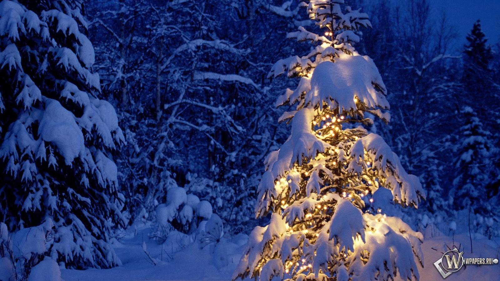 В снежном лесу зима снег лес новый