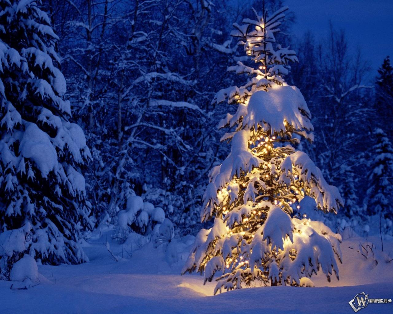 Елка в снежном лесу