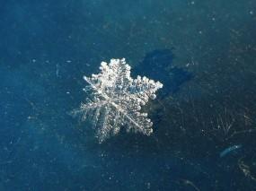 Обои Снежинка в солнечном свете: Лёд, Снег, Снежинка, Лёд