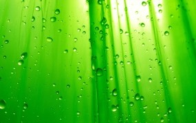 Обои Зелёный фон: Капли, Зелёный, Фон, Вода