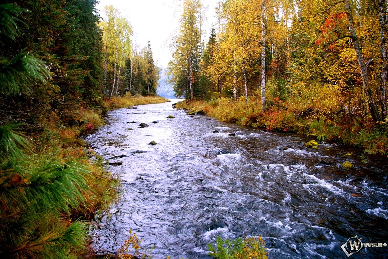 Лесной ручей 1500x1000