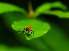 Красный жук на листе