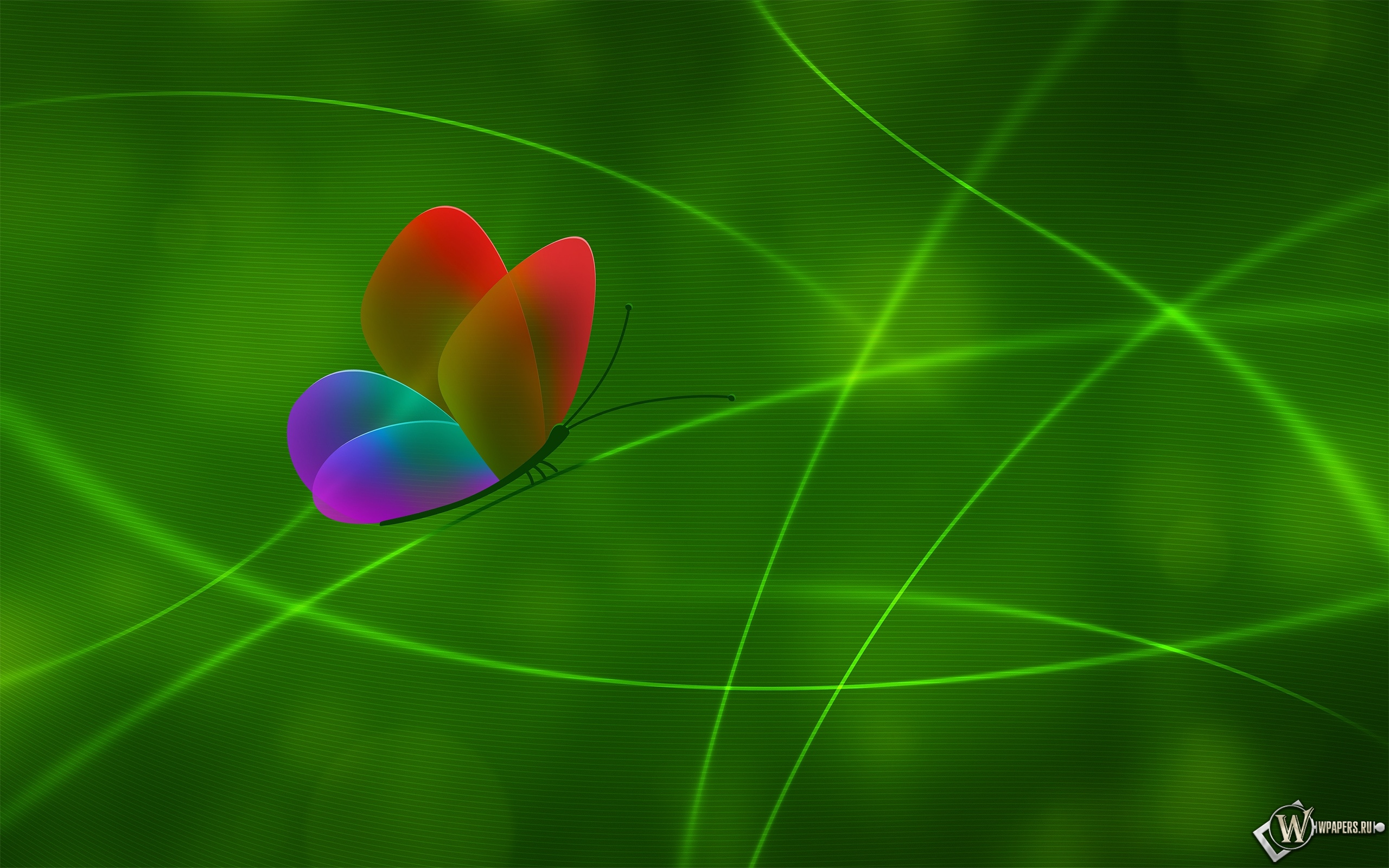 Радужная бабочка 2560x1600