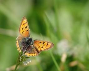 Обои Жёлтая бабочка: Цветок, Лист, Бабочка, Бабочки