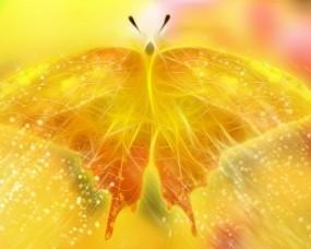 Обои Жёлтая бабочка: Бабочка, Желтый, Бабочки