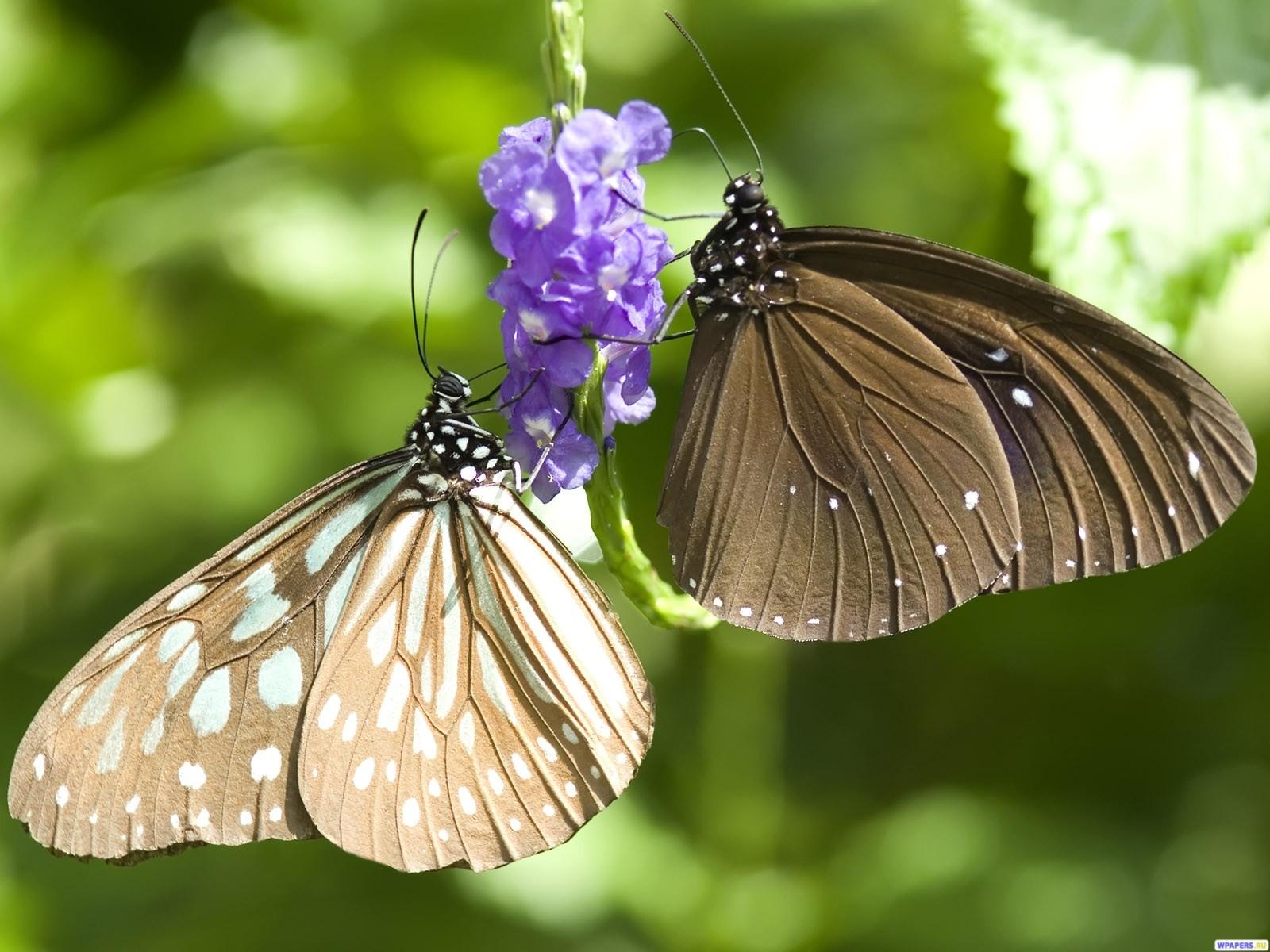 Бабочки 1600x1200
