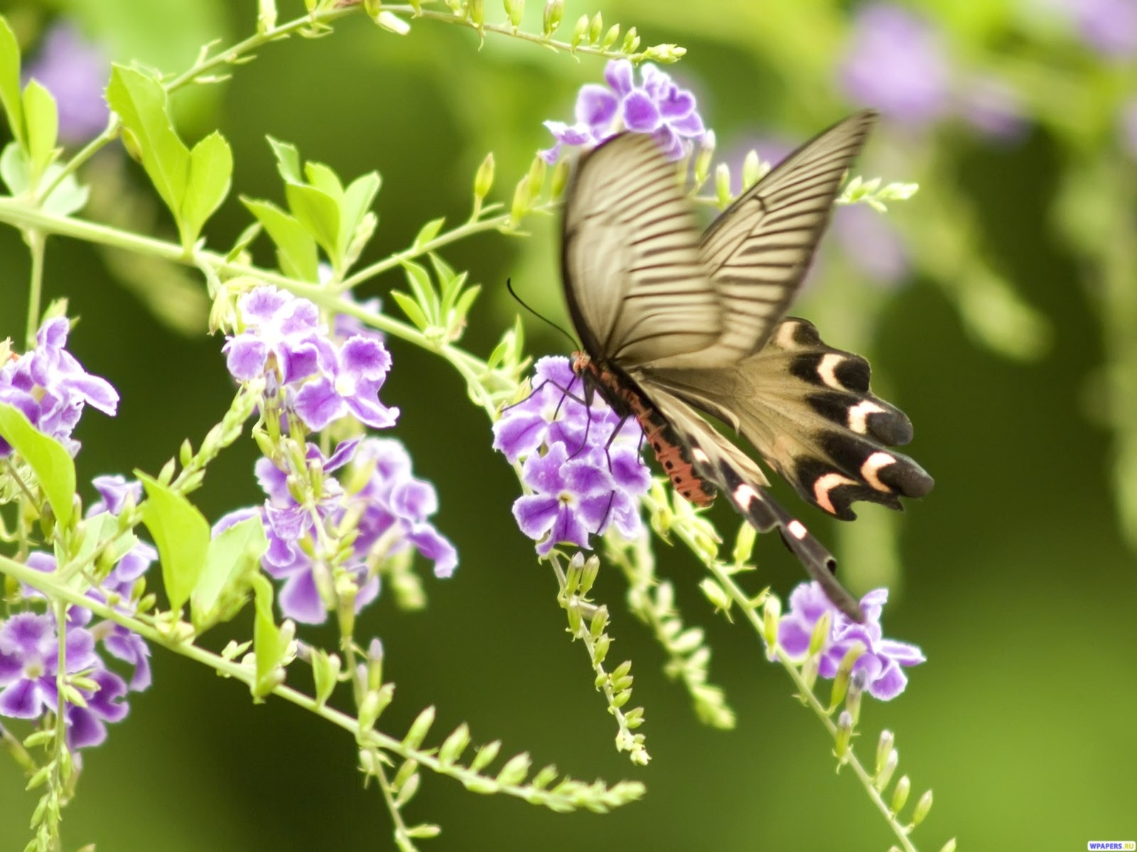 Бабочка 1600x1200