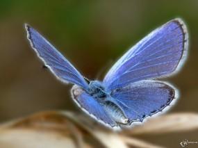 Обои Прекрасная бабочка: , Бабочки