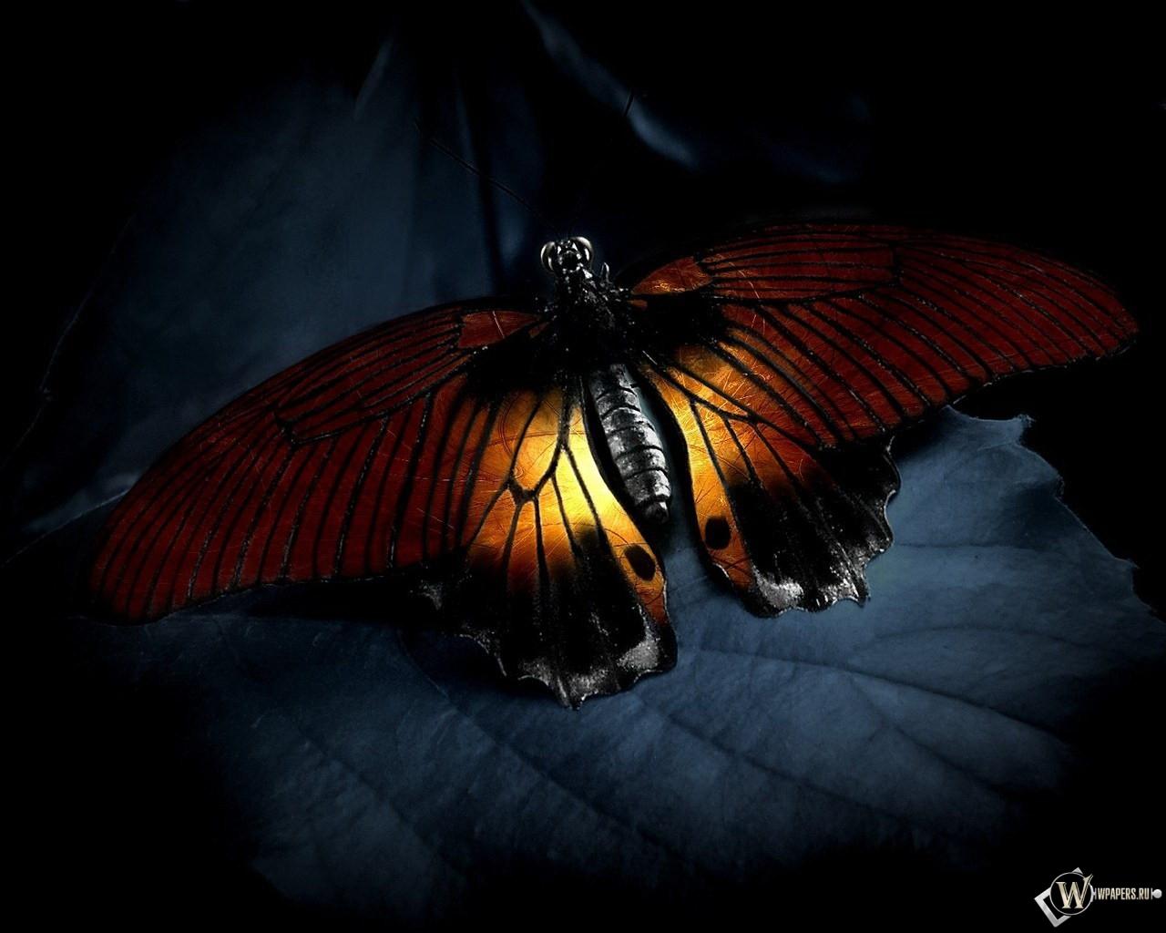 Бабочка 1280x1024