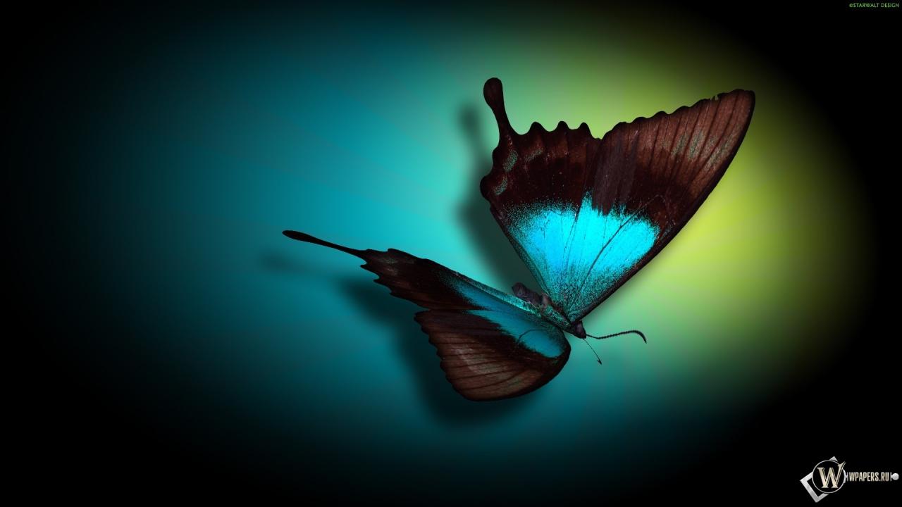 Бабочка 1280x720