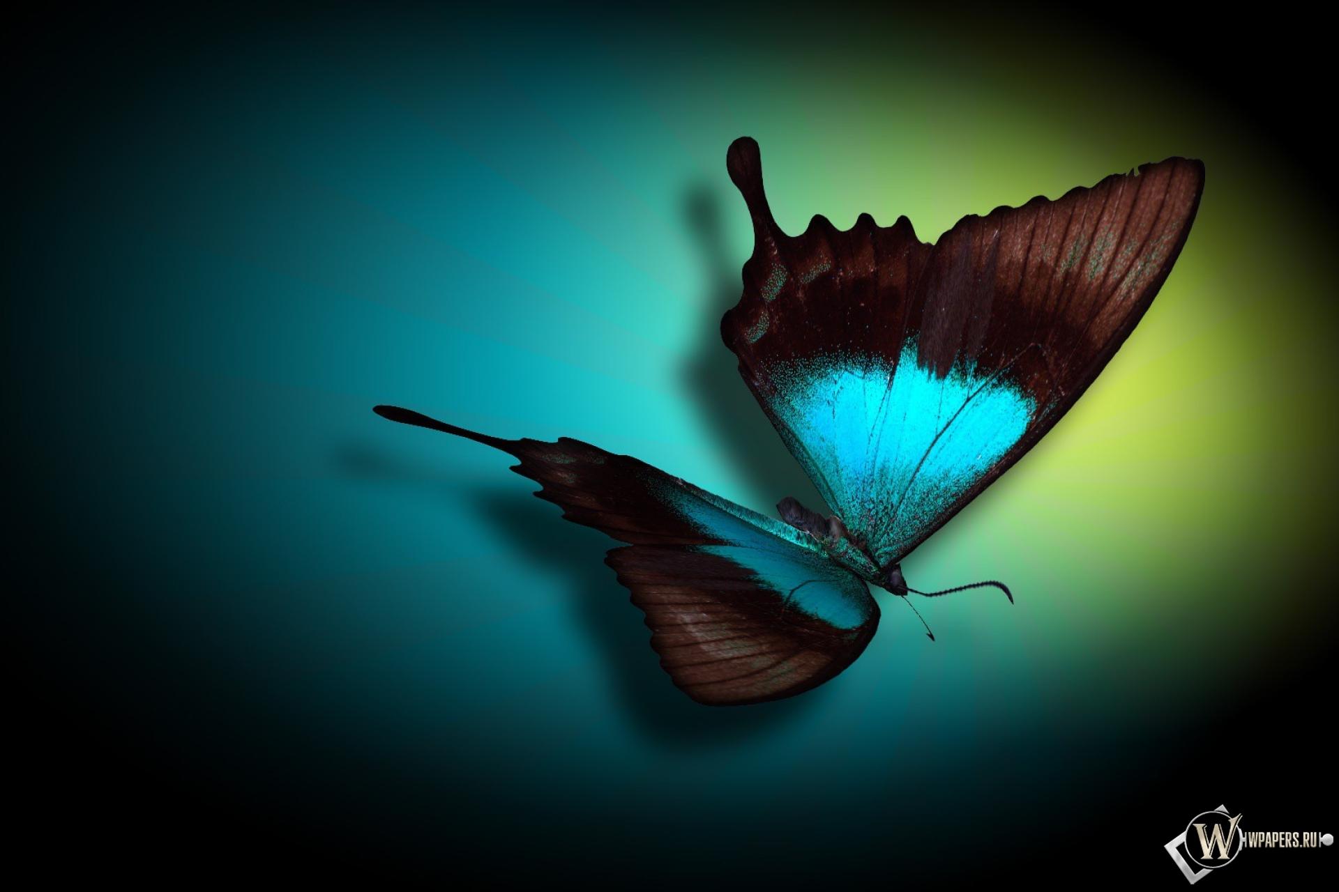 Бабочка 1920x1280