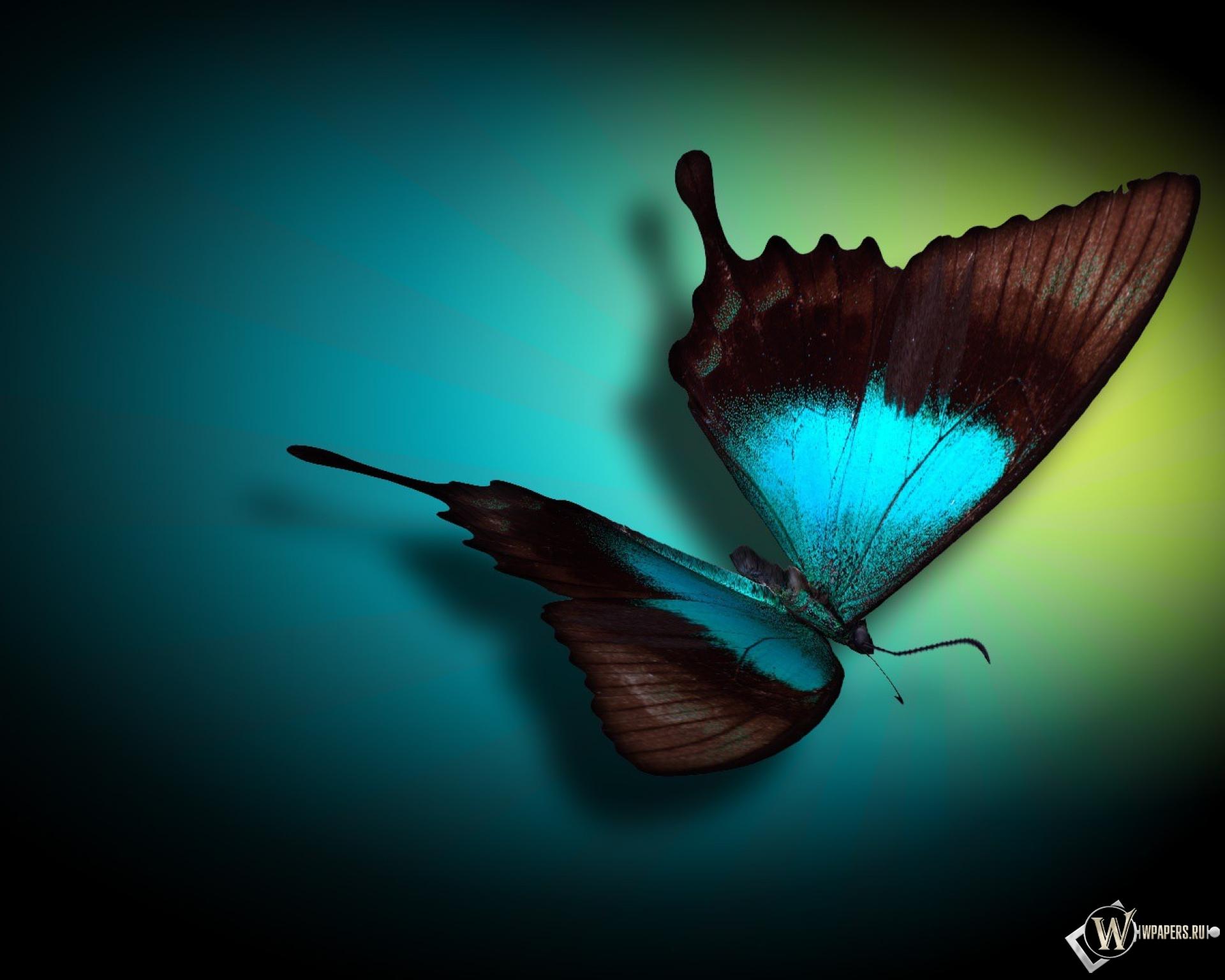 Бабочка 1920x1536
