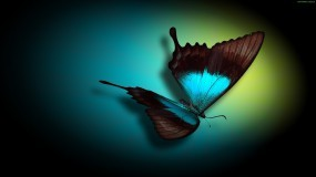 Обои Бабочка: Бабочка, Бабочки