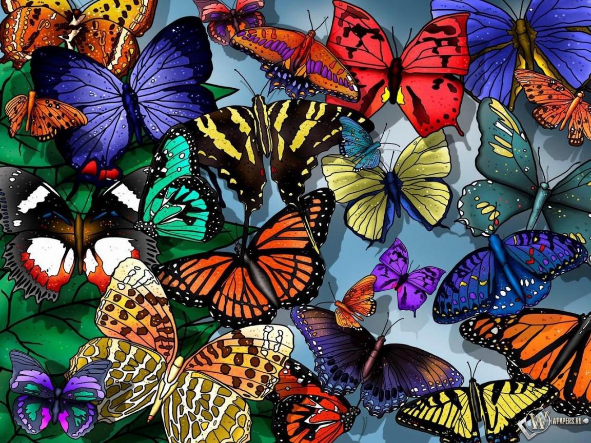 Обои разноцветные бабочки на рабочий