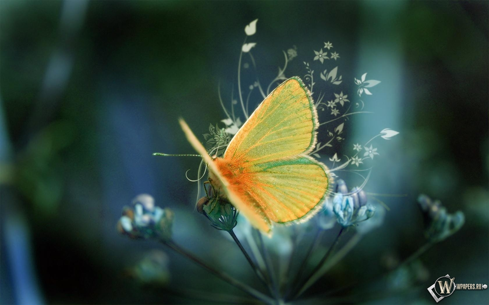 Желтая Бабочка  1680x1050