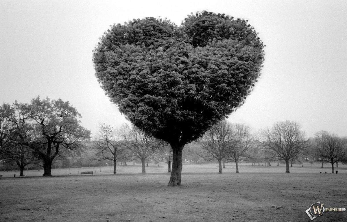 Обои дерево любви на рабочий стол с
